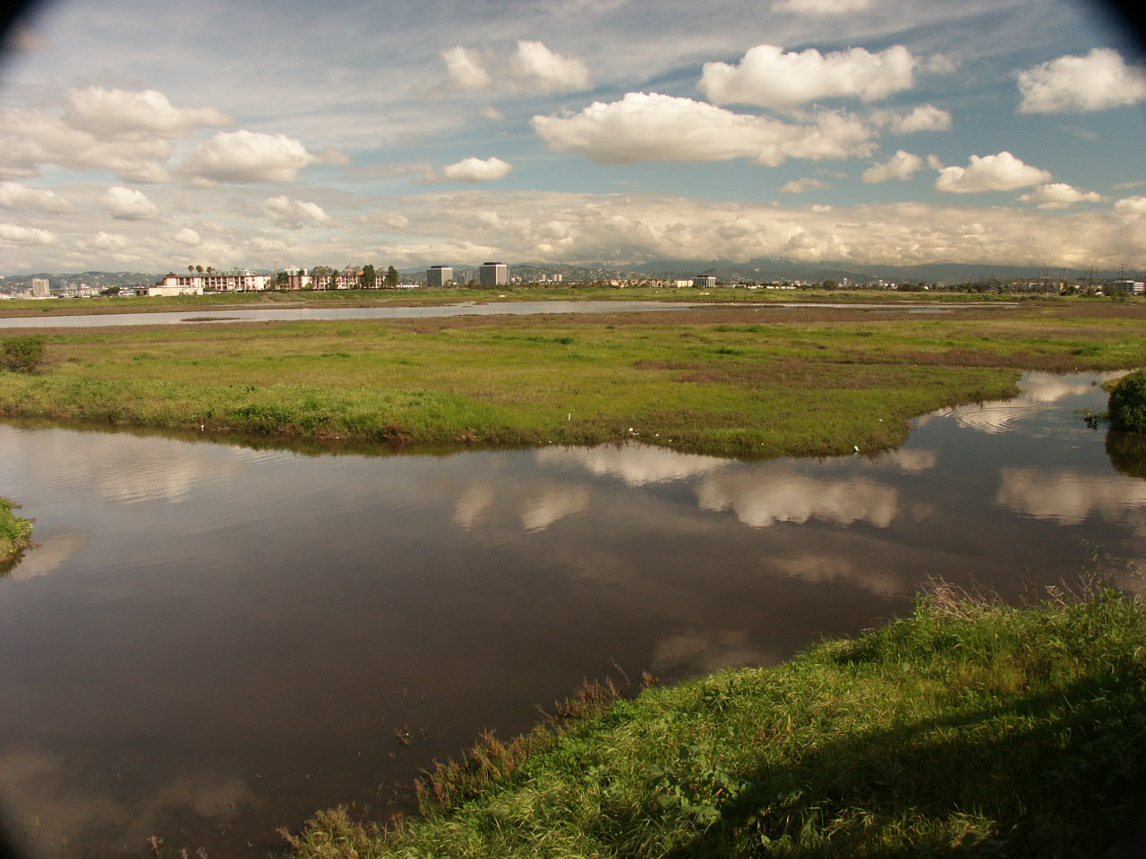 Ballona Wetlands Restoration Planning