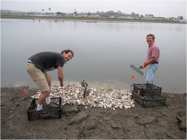 Alamitos Bay Oyster Restoration Project