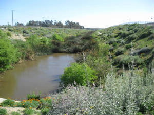 DeForest-Dominguez Wetlands Restoration: Planning and Design