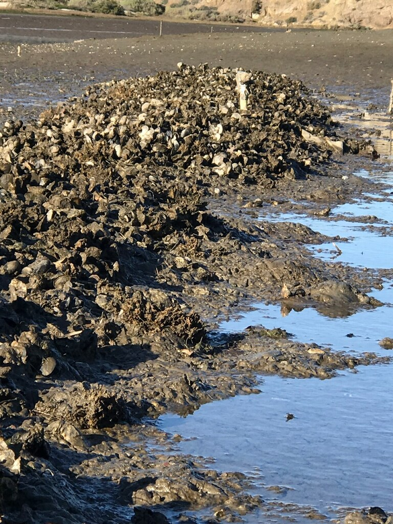 Upper Newport Bay and Alamitos Bay Living Shoreline Project